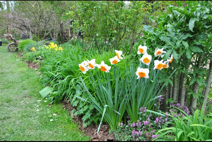 Conférence « Le jardin d\'ornement : les solutions naturelles » par ...
