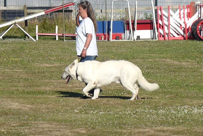 Concours canin «Obéissance»