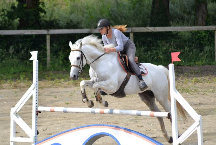 Concours équestre de saut d'obstacles