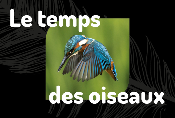 «Le temps des oiseaux» : un week-end d'animations tout public