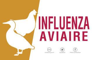 [Influenza aviaire] Le niveau de risque passe à élevé en France métropolitaine